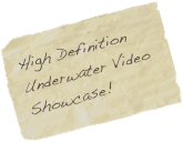 High Definition Underwater Video Showcase!